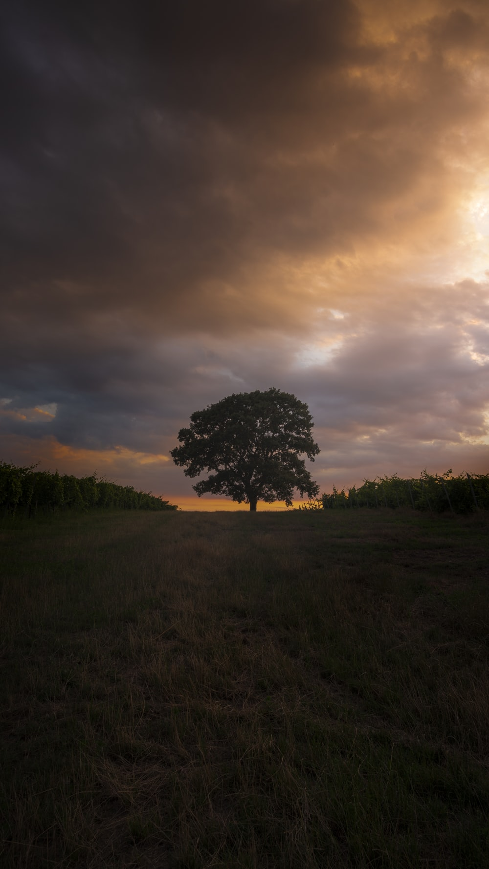 green lonely tree in green field under white and orange skies