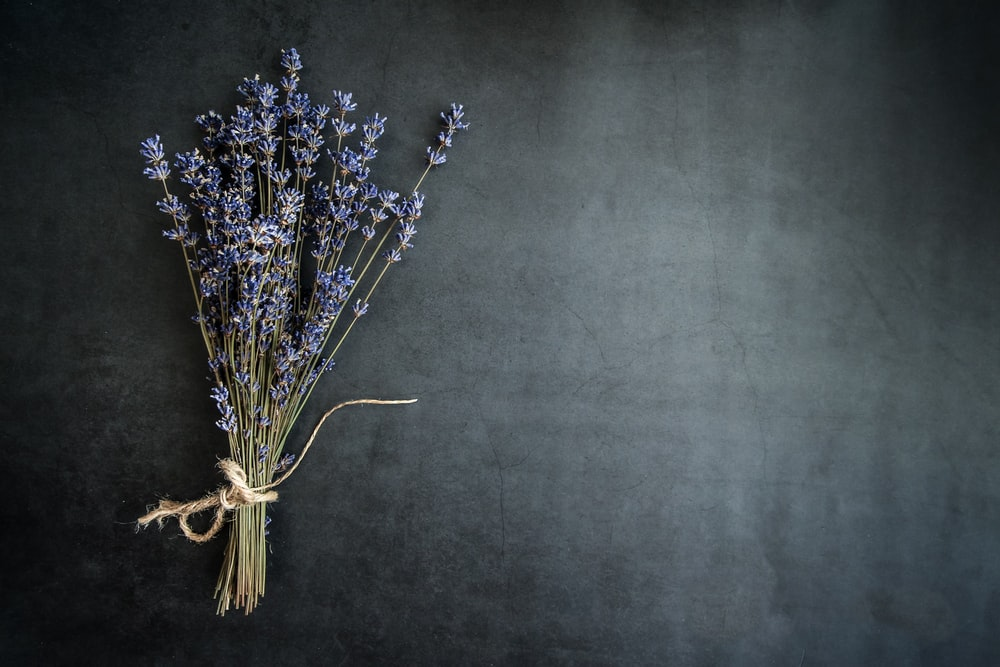 purple lavender flower