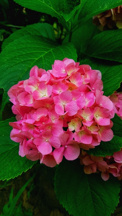 pink petaled flowers close-up photography