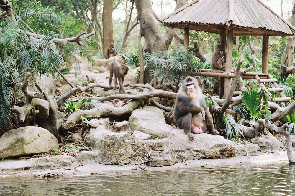monkey sitting on rock near river