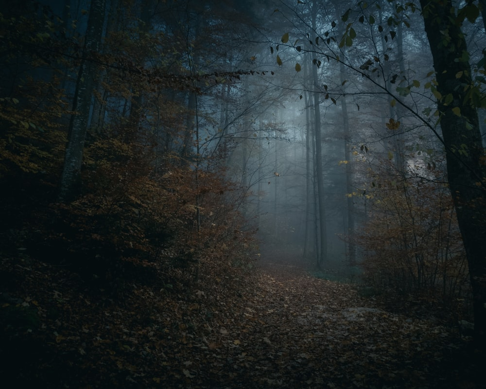 photo of forest with fogs