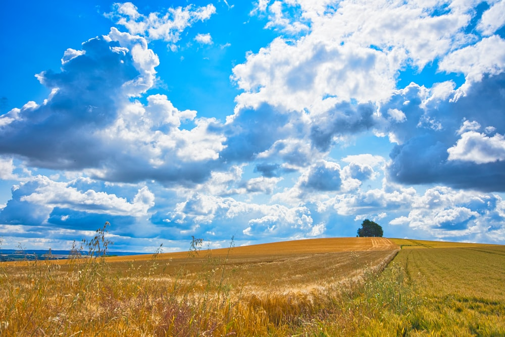 brown field under white and blue cloudy skies