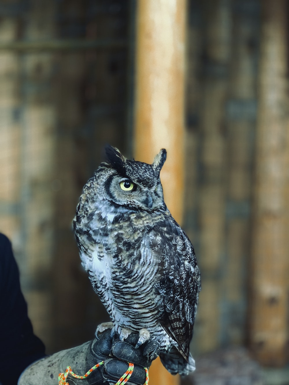 person holding gray owl