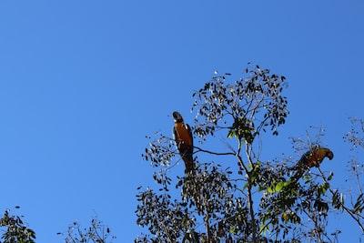 birds on tree during daytime