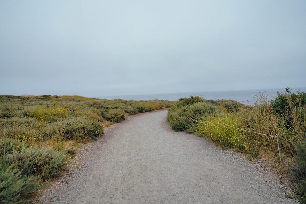 gray concrete road near green field