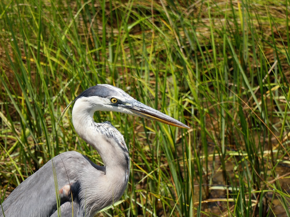 shallow focus photo of gray bird