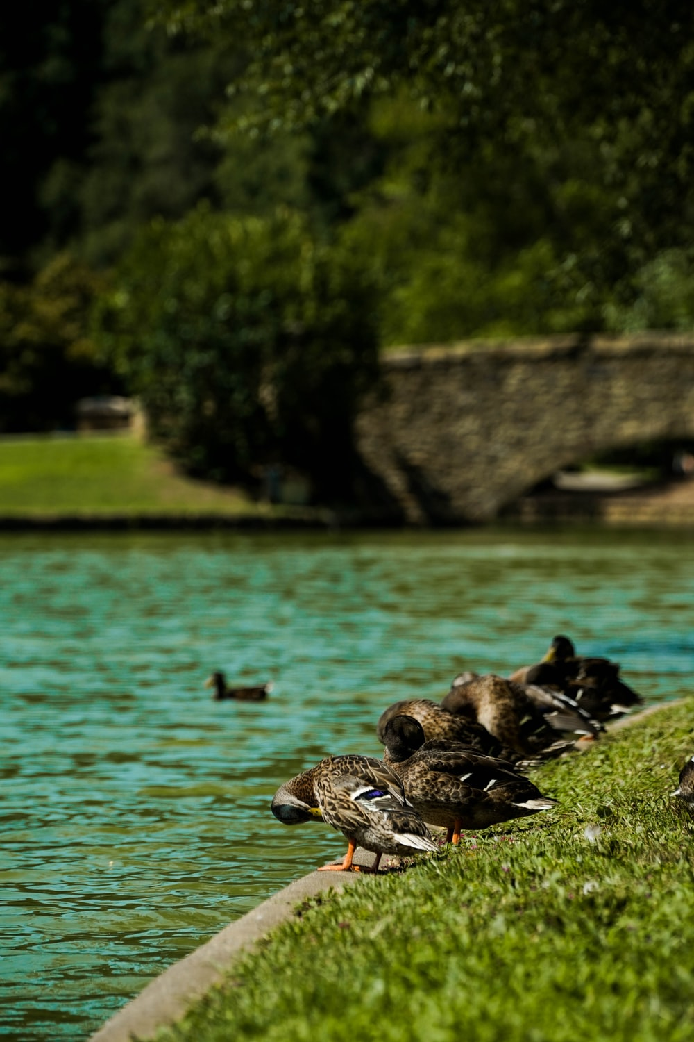 ducks beside body of water