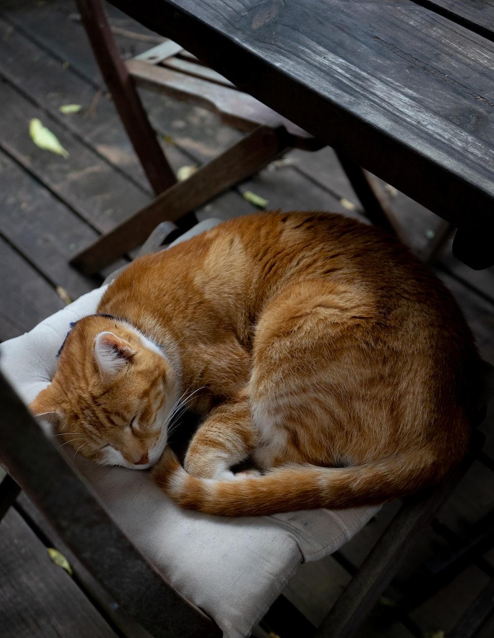 orange tabby cat sleeping on white pillow