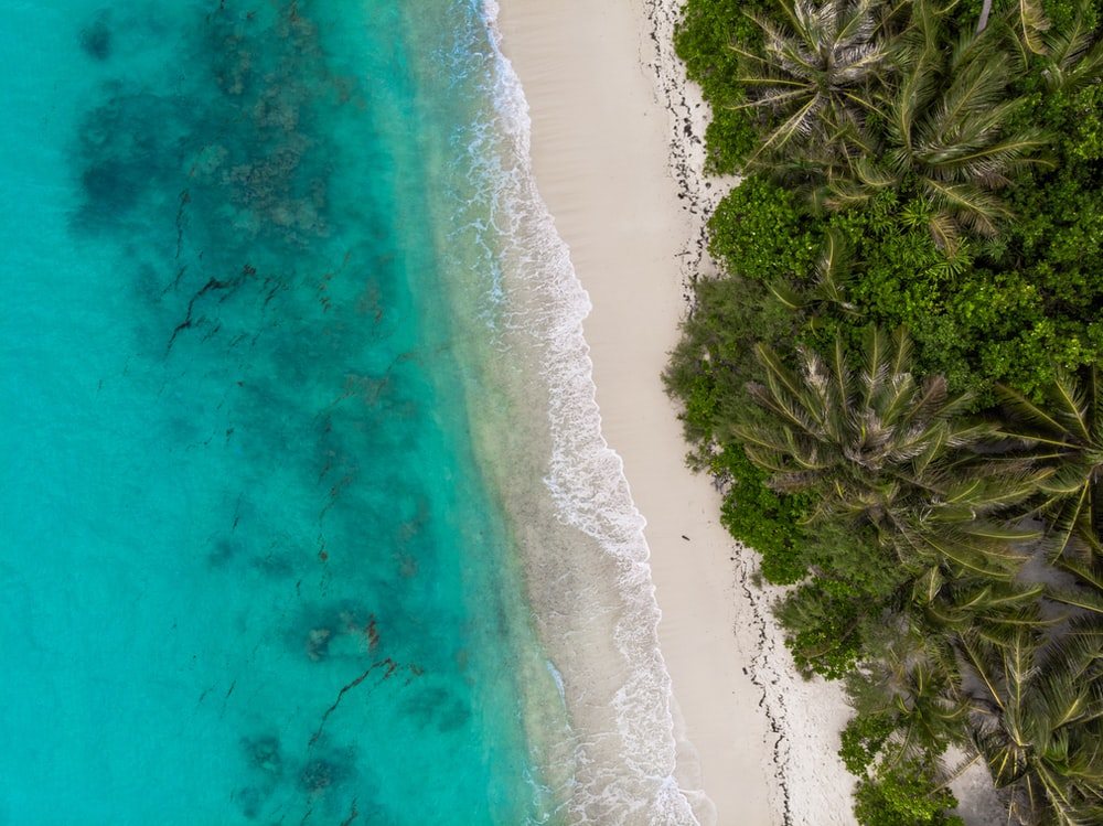 aerial photography green coconut palm trees near body of water