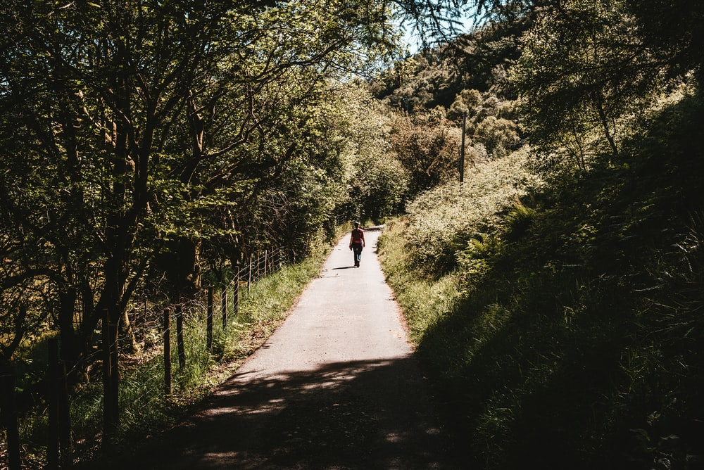 person walking on pathway under trees