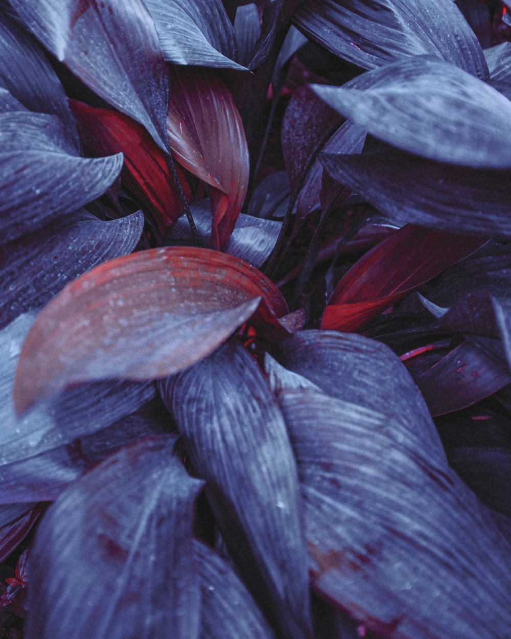 shallow focus photo of blue plants
