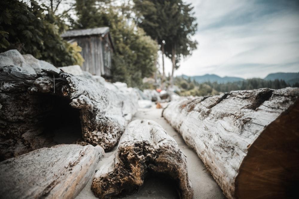 brown wood bark and log photo