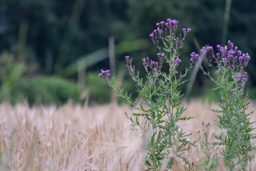 focus photography of purple petaled flowers