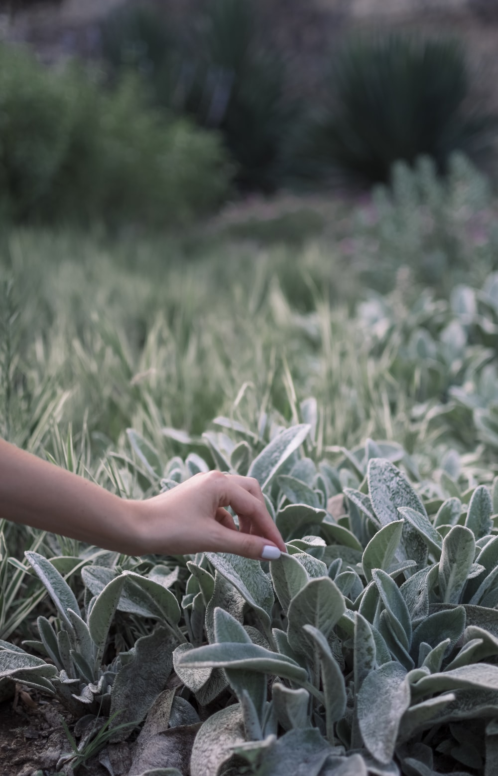 green succulent plants and person's hand