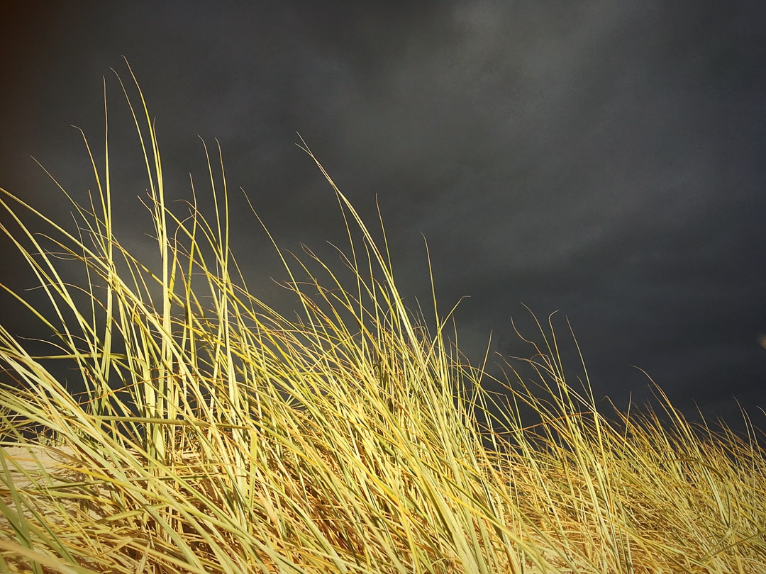 Dramatic storm and long grass by the beach