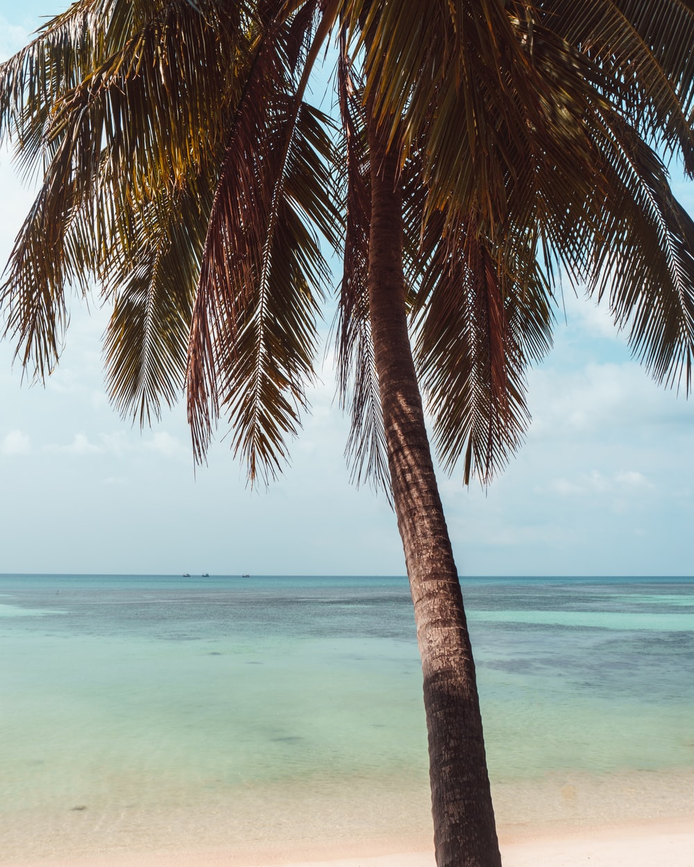 brown and green coconut tree near body of water