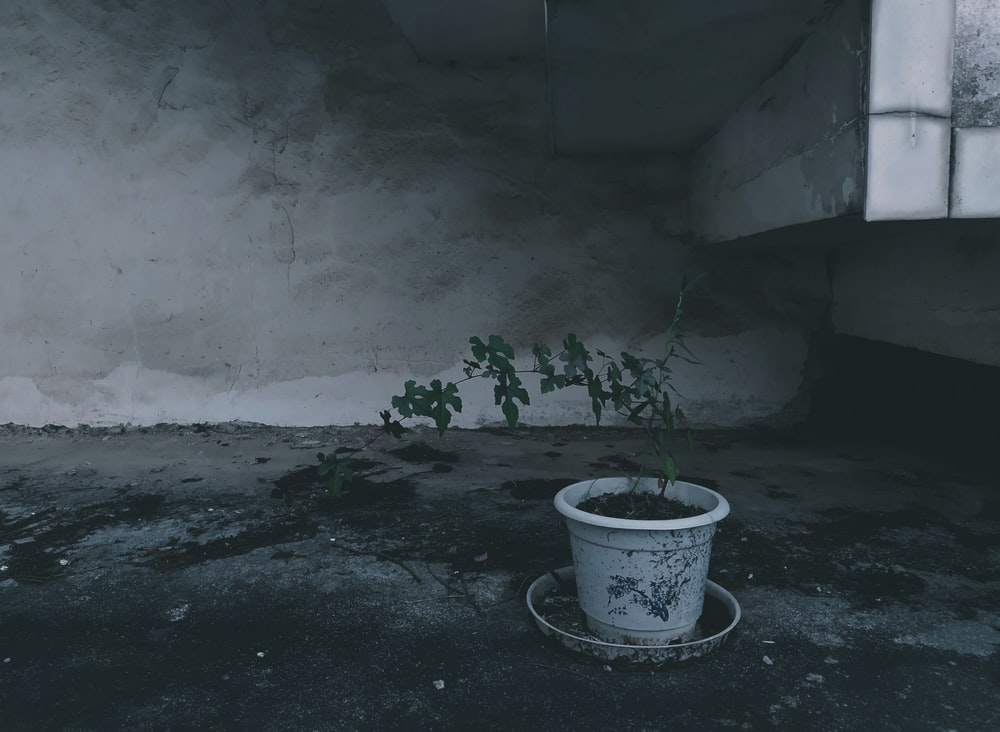 green-leafed plant in white pot