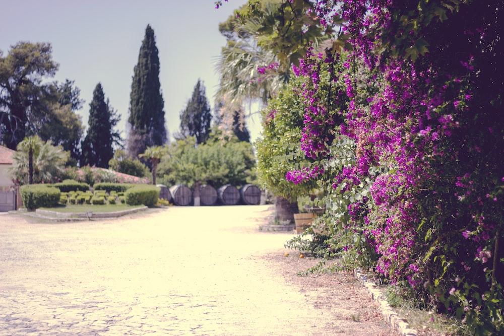 purple flowers near trees