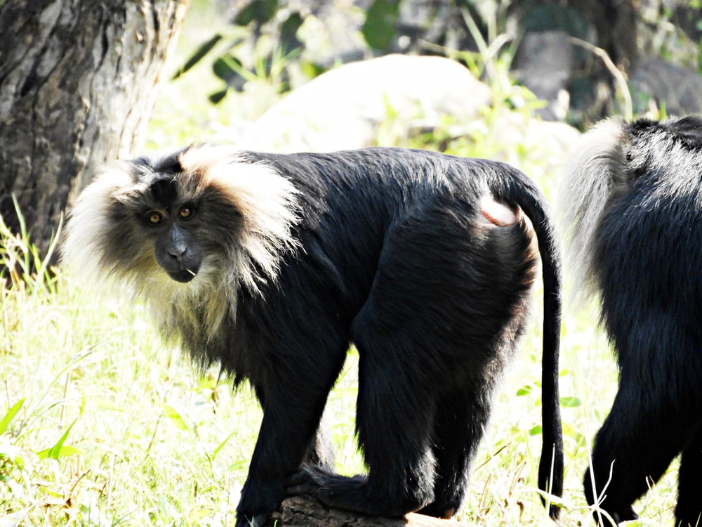 two black-and-white monkeys near tree