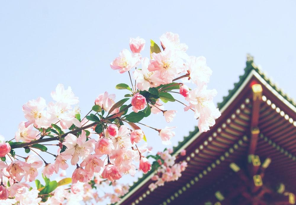 pink petaled flower near temple