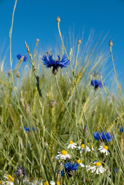 blue petaled flower plants