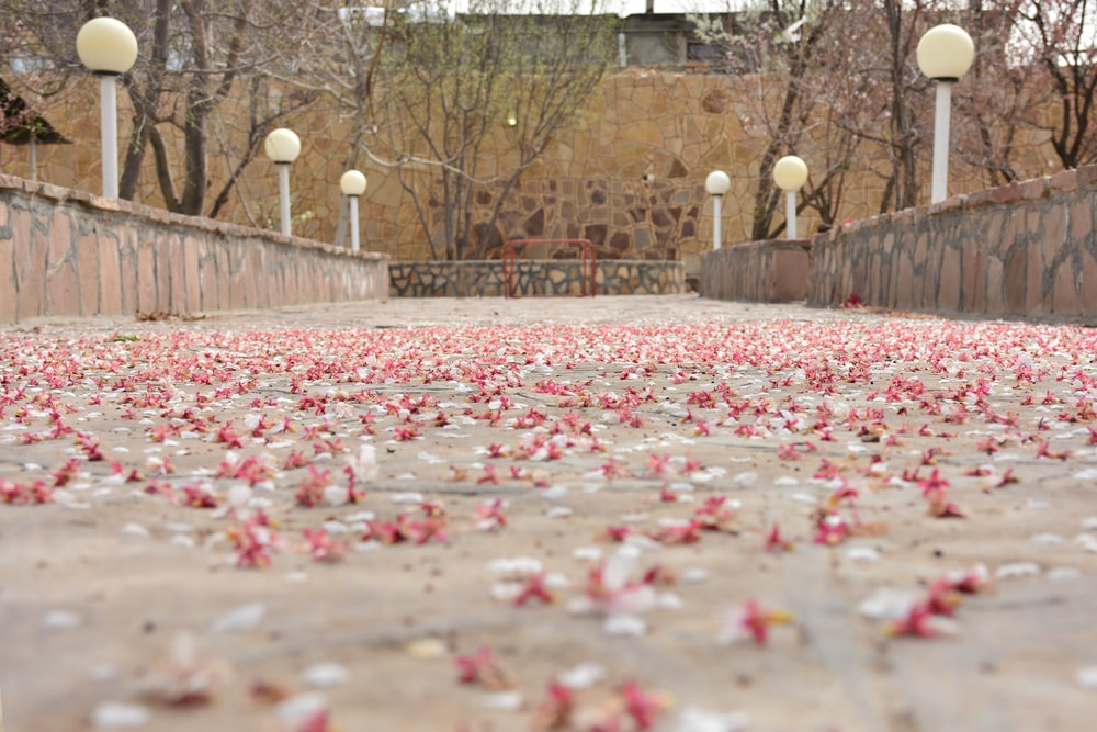 shallow focus photo of pink flowers on ground