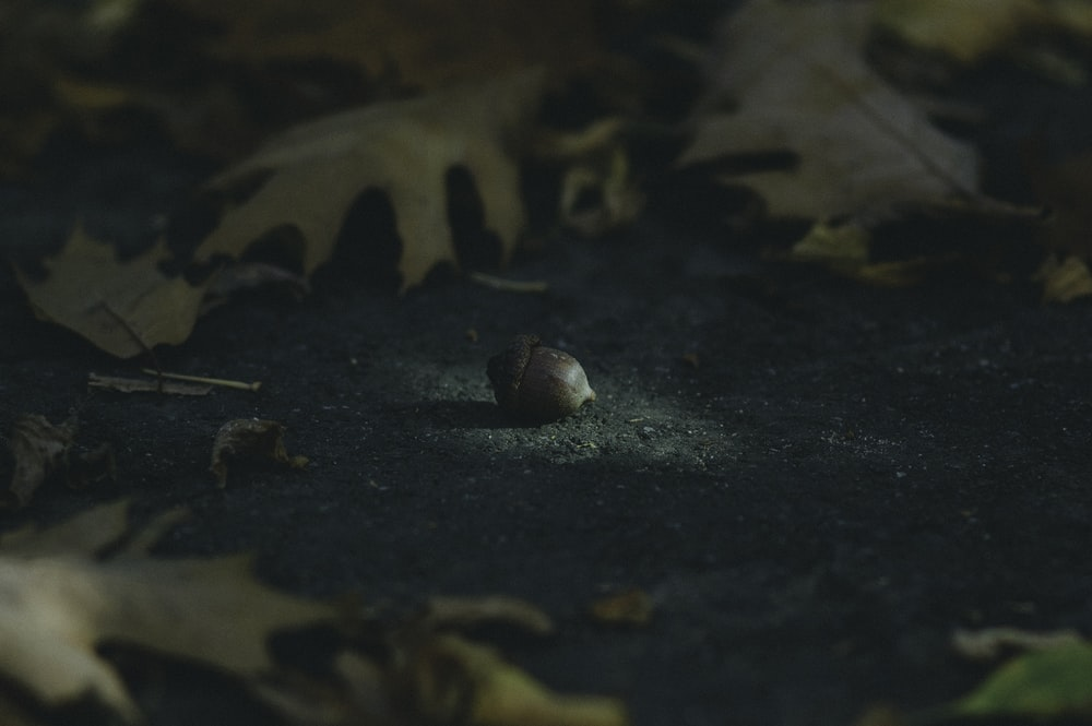brown acorn surrounded by leaves