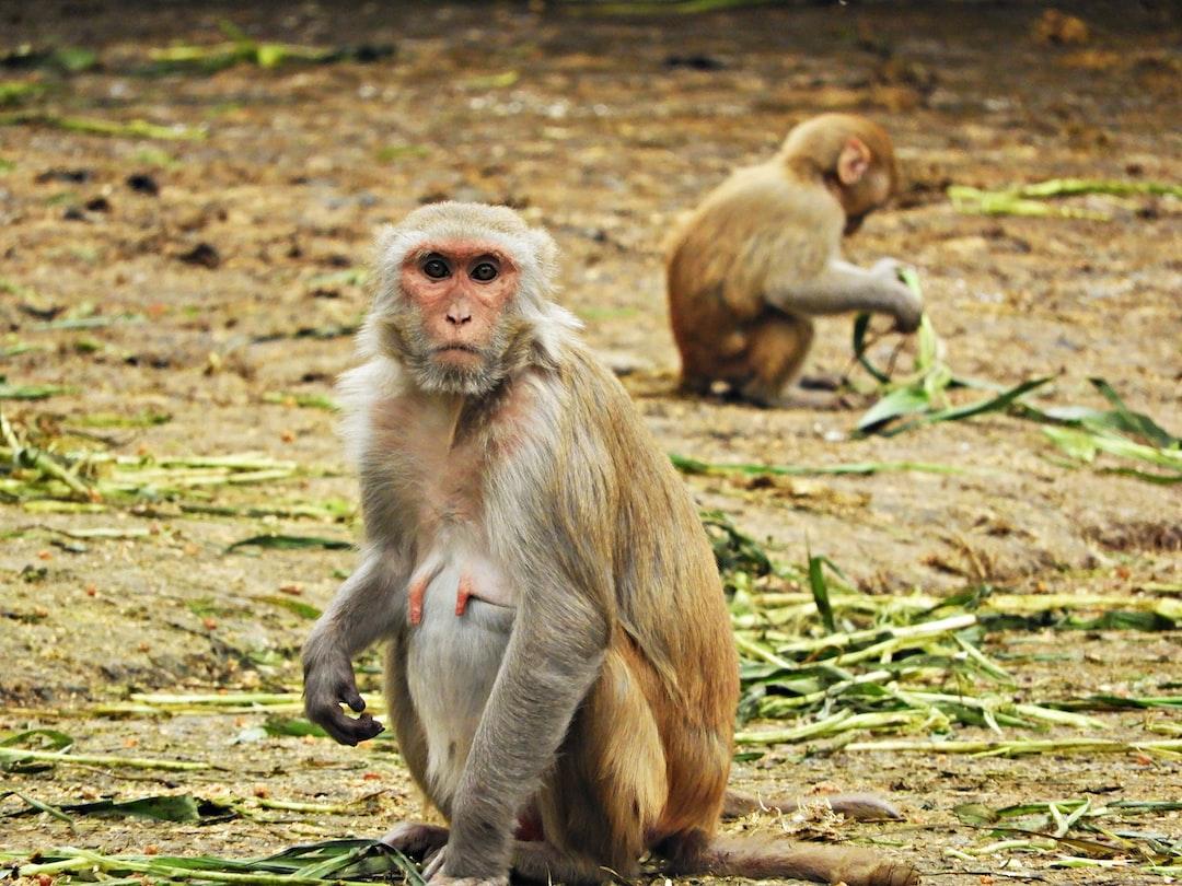 Just monkeying around !