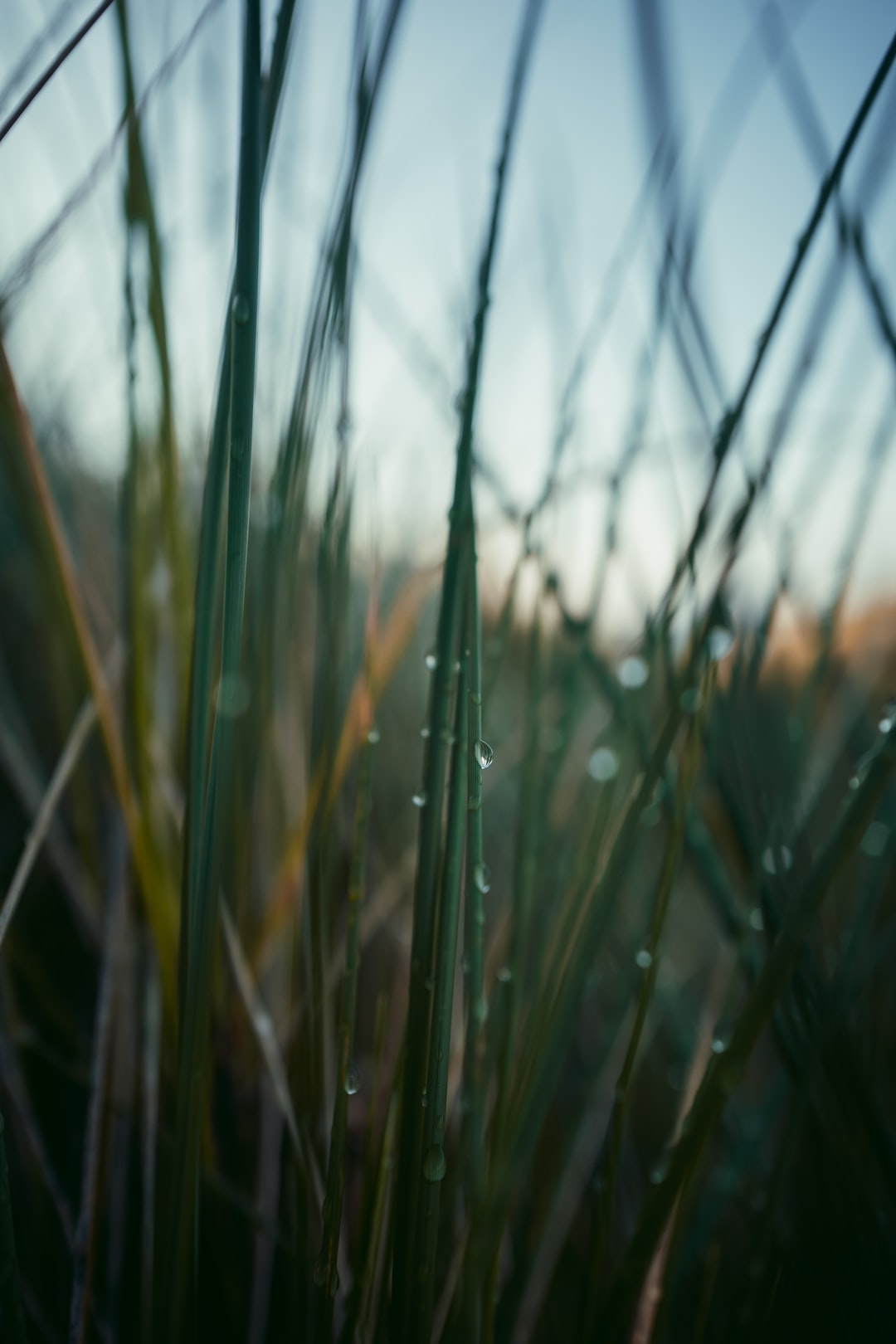 Moody wet gras in the sunset – vertical