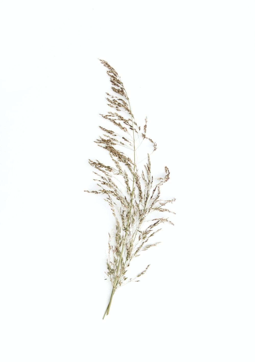 beige petaled flower