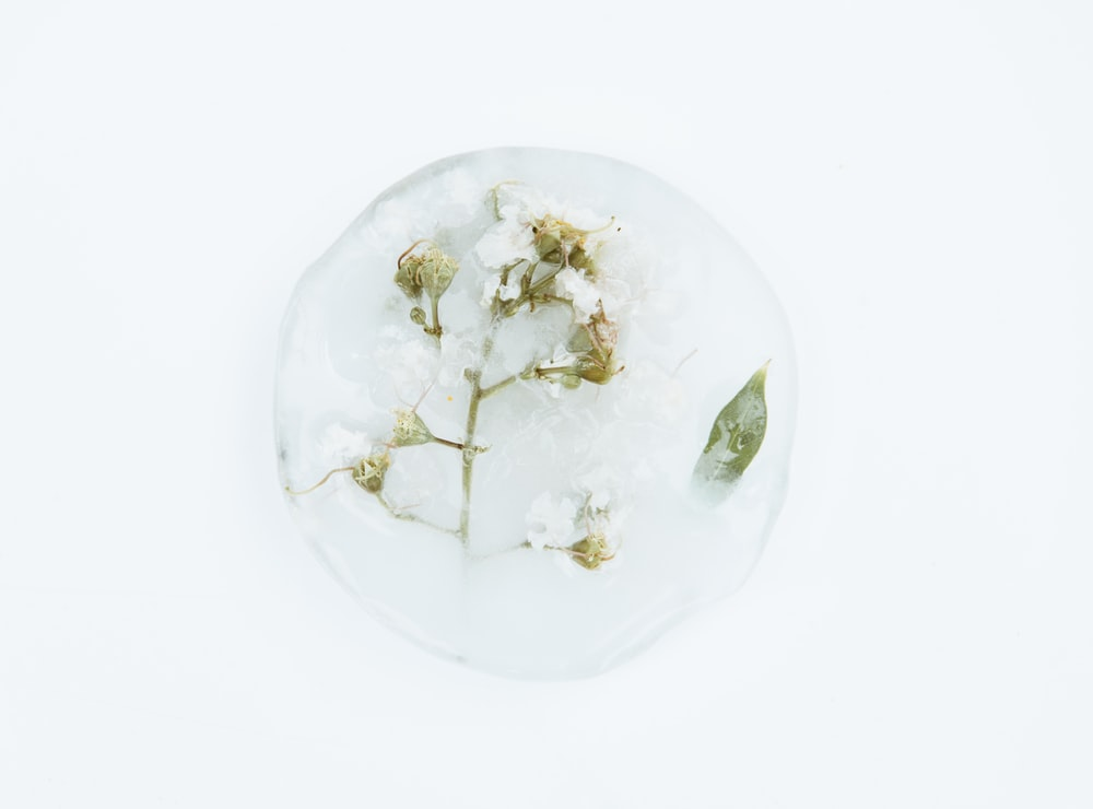 white flowers in snow ball
