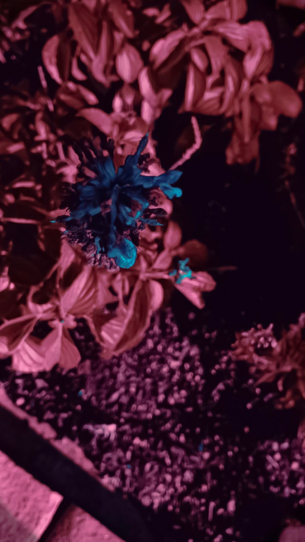 blue flower in selective-color photography