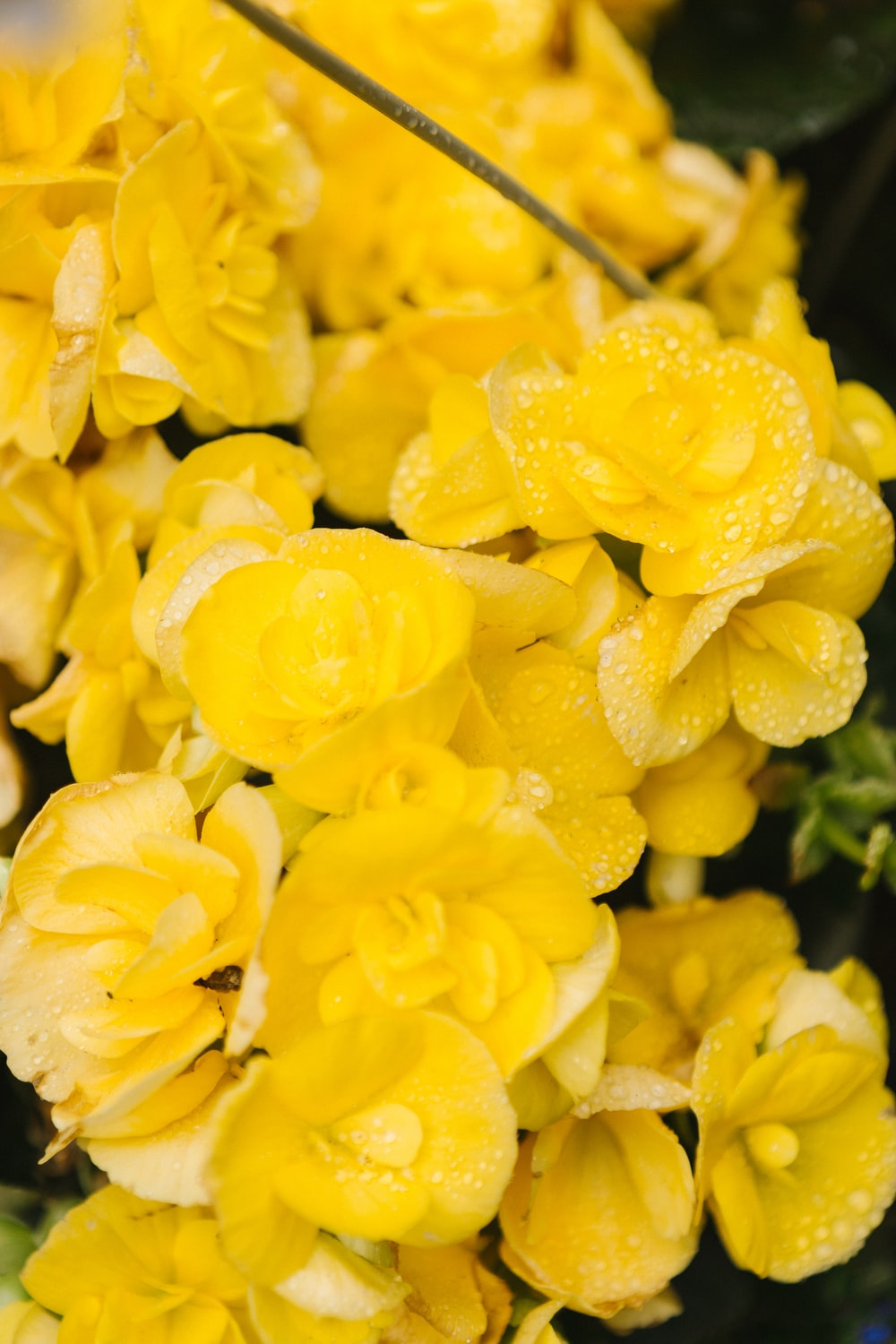close-up photography of yellow cluster flowers