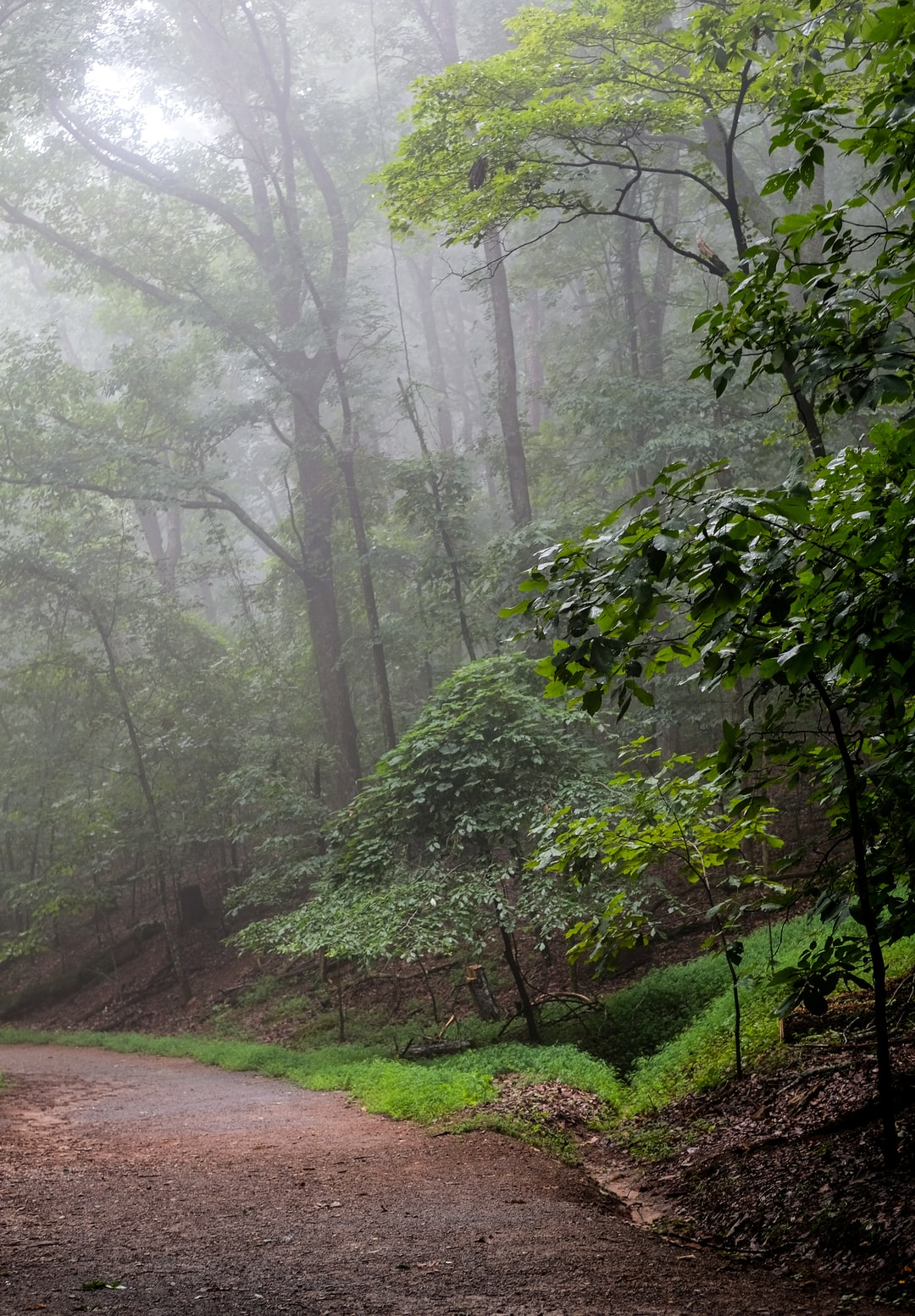 Foggy mountain trail with trees