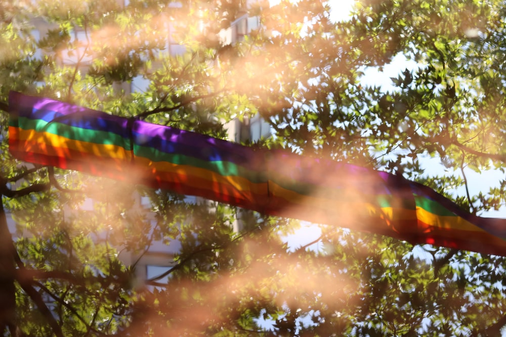 multicolored textile on top of tree
