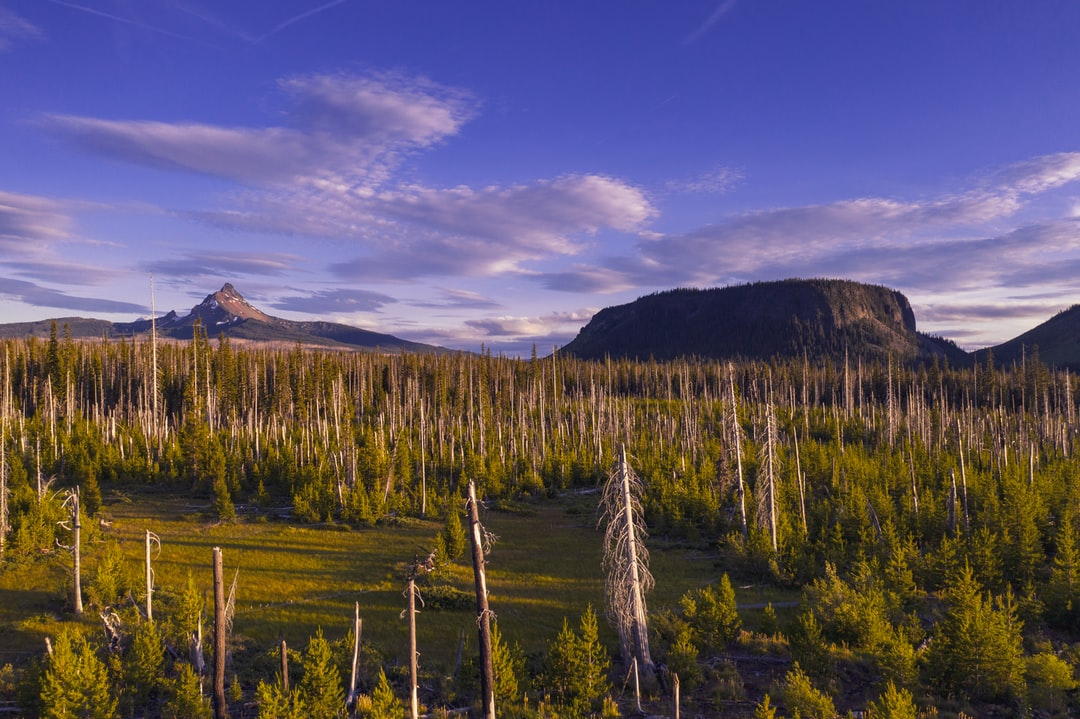 """This is a low-level drone photo of Mount Washington and a """"tuya"""" called Hayrick Butte in the Cascade Mountains. Hayrick Butte was a subglacial volcano, which is why it has such a flat surface. Cool. This area was ravaged by a forest fire about 10 years ago and the husks of the dead trees are slowly disappearing under the new forest. It looks pretty but it would look even prettier if people didn't cause forest fires."""