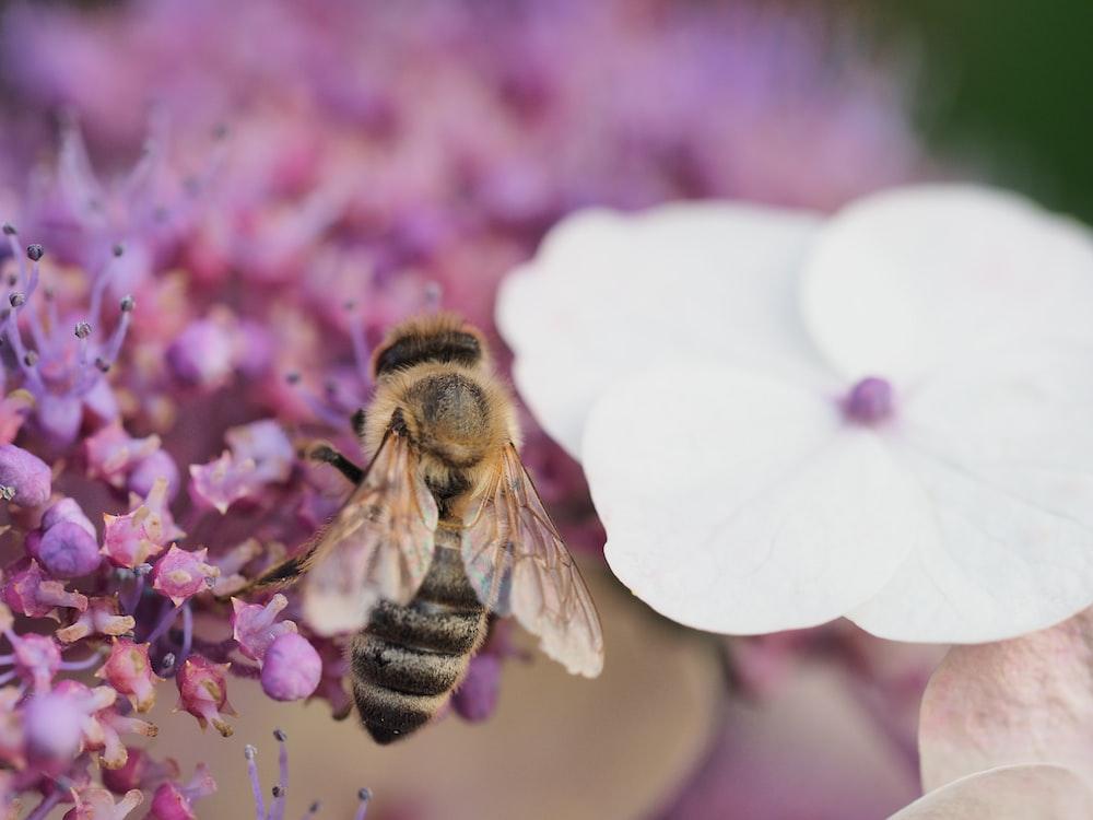 brown bee