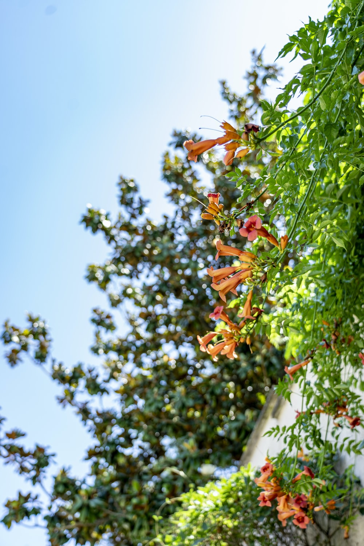 orange-petaled flowering plant