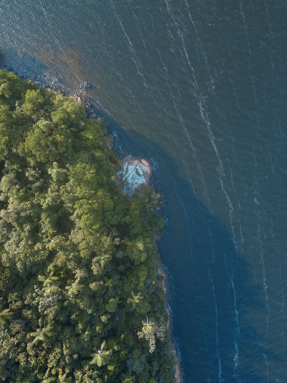 aerial view of trees and body of water