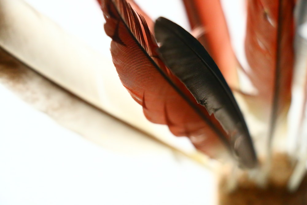 red and black feathers
