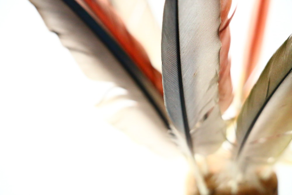 assorted-color feathers