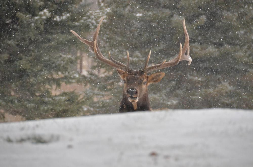 reindeer during daytime