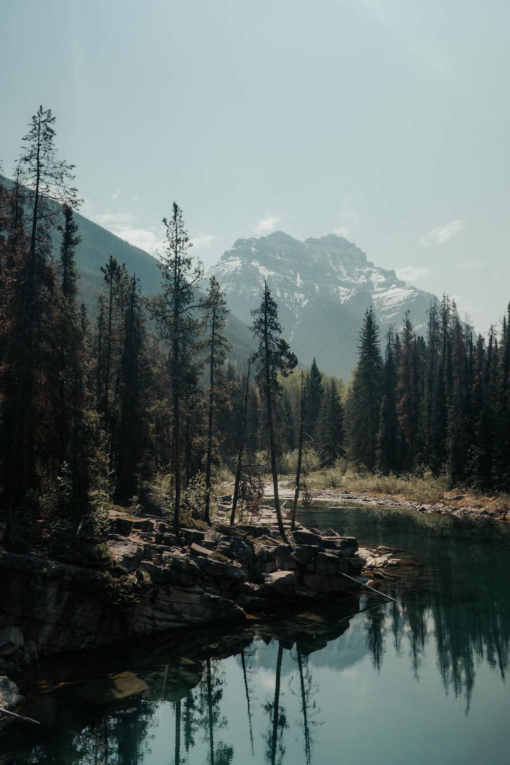 body of water surrounded with trees at daytime