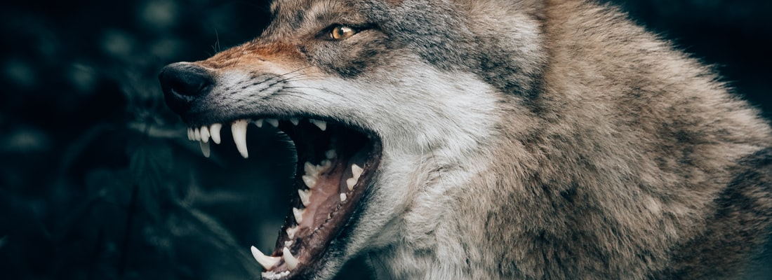 New Government Bill Would Set Wolves Among The Sheep