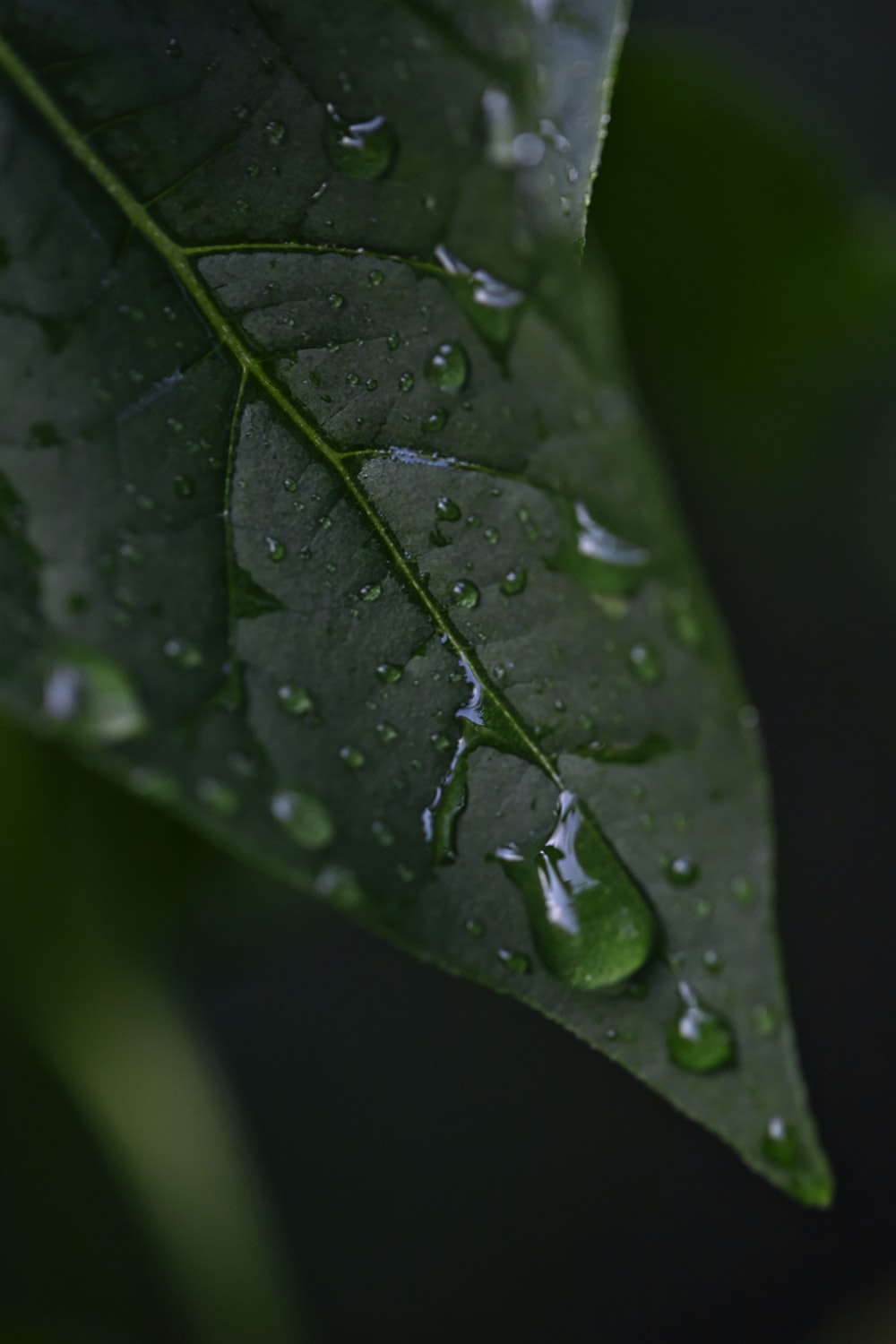 green leaf with water drop close-up photography