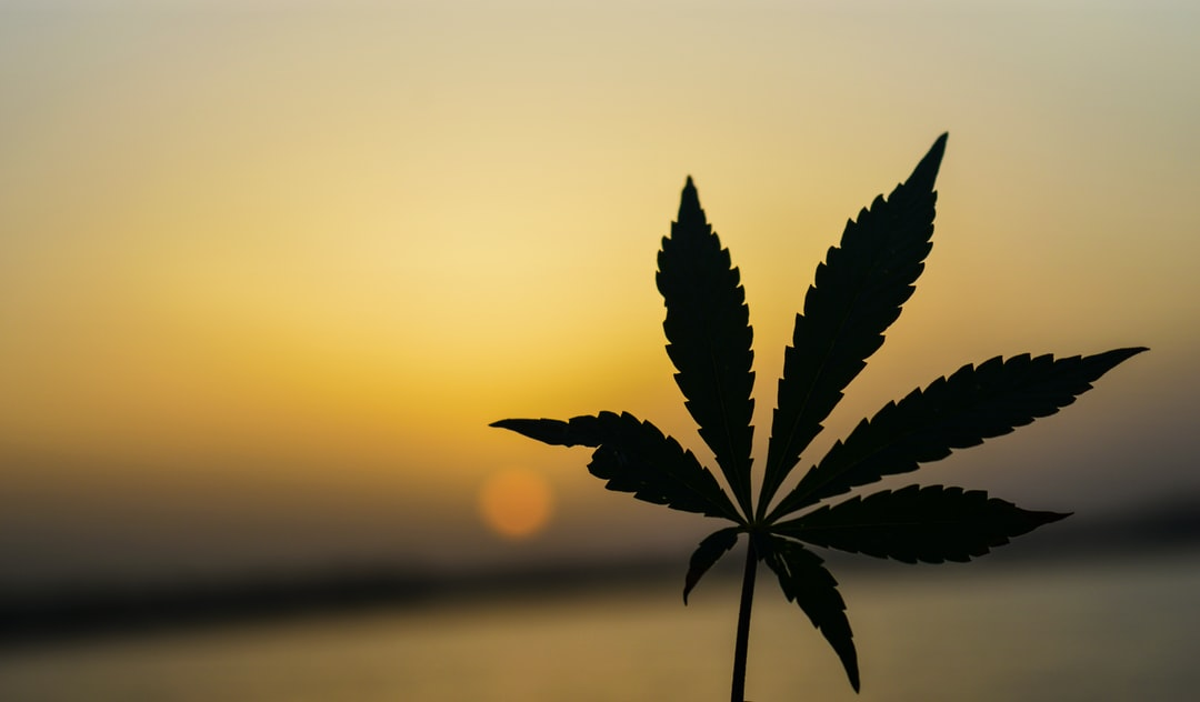 Marijuana weed silhoutte lake hemp green sunset