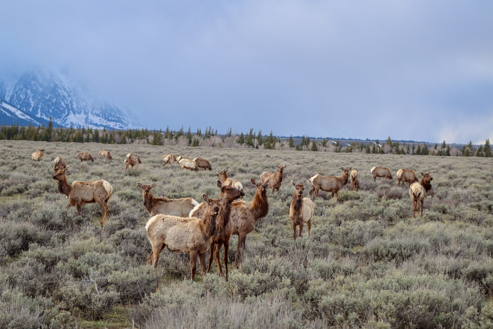 herd of goat on field
