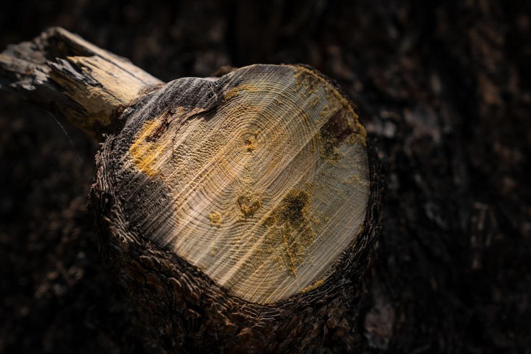 Freshly cut stump at 8,500 feet.