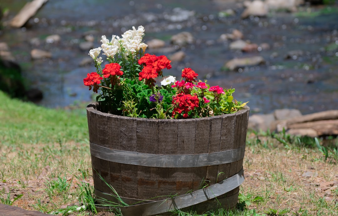 Flowers in a barrel by a stream known as the Little Colorado.