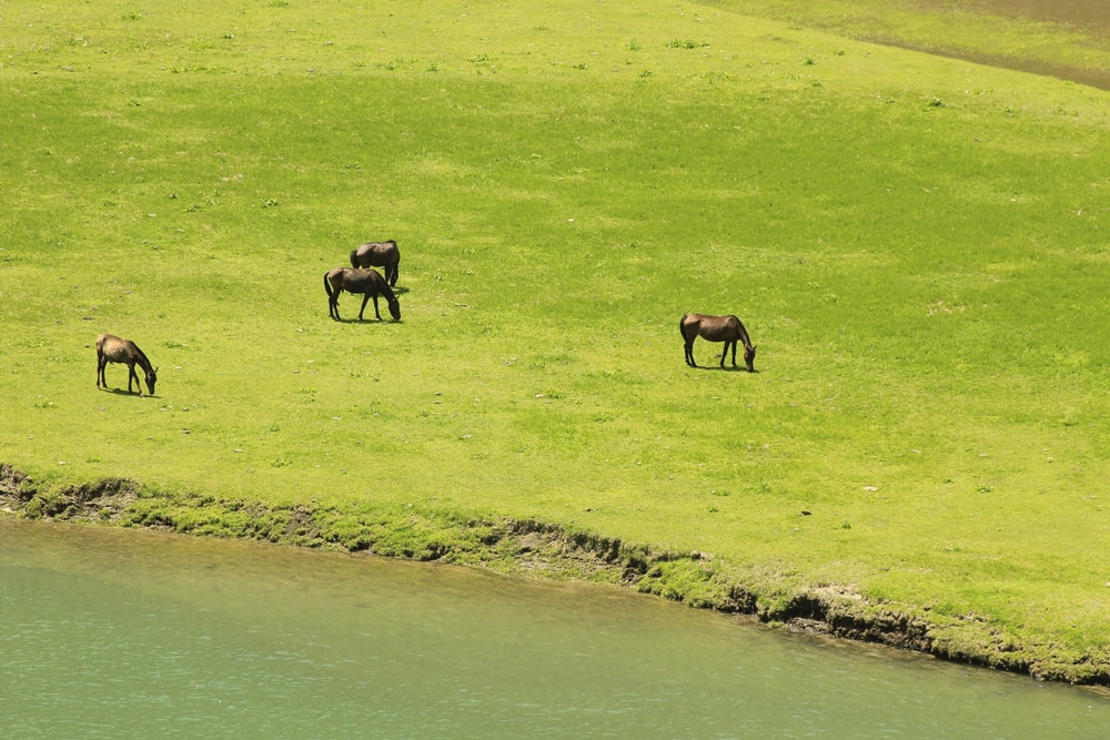 four black and brown horses at daytime